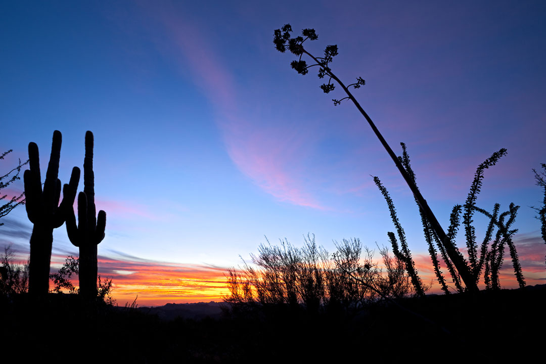 Saguaro and Agave silhouette in red blue sky of Apache Trail, shot by Anton Foltin